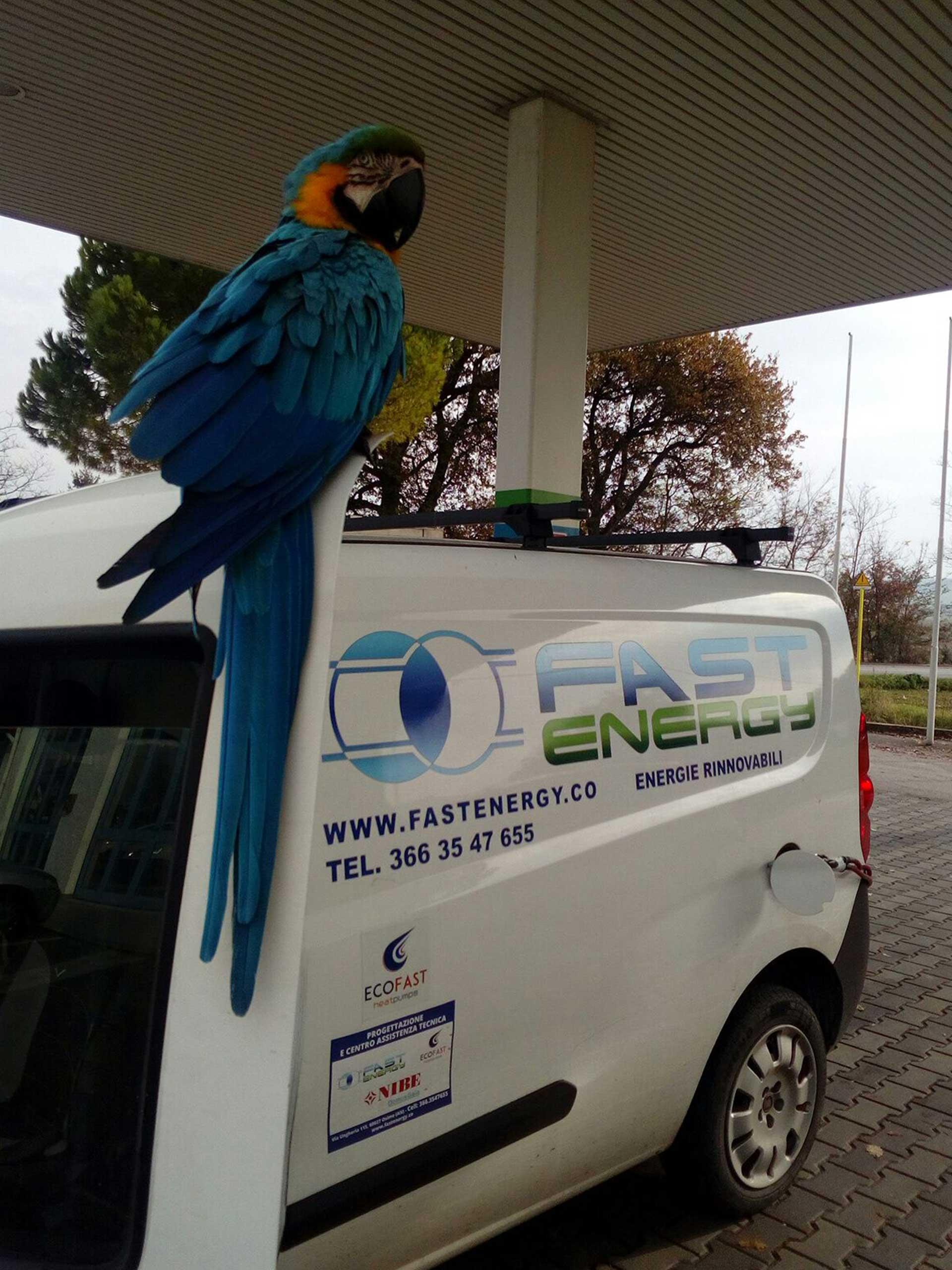 Energie-pulite-Fast-Energy